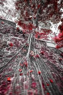 Artology-Johannes-Weinsheimer-Robinow-Hongkong-Red-Tree